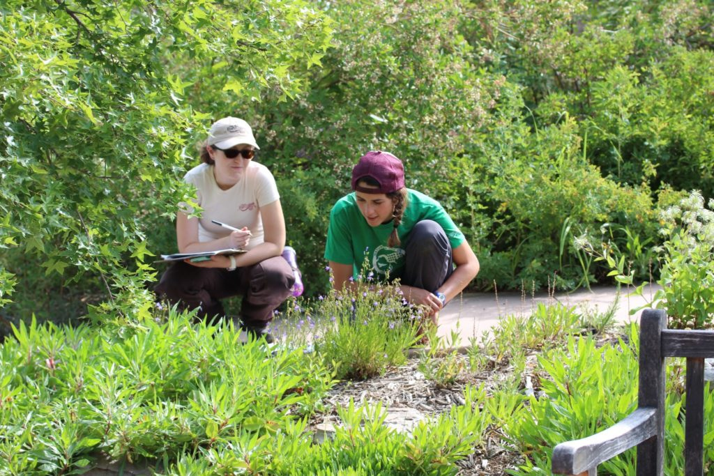 Volunteers observing flowers and collecting data on bees visiting the flowers.