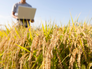 Man working with a laptop in a wheat field