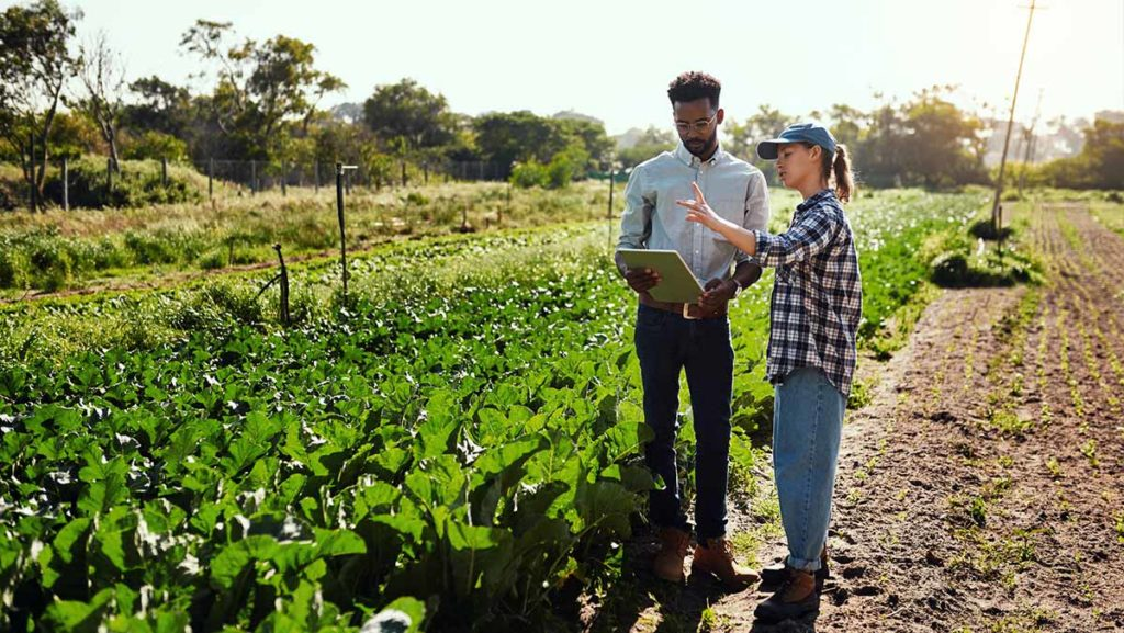 A man and a woman working with a clipboard in a field of crops
