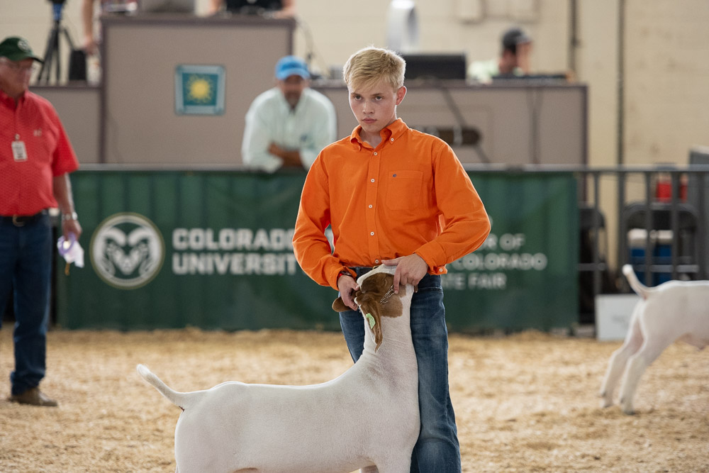 A 4-H participant shows a goat at the Colorado State Fair